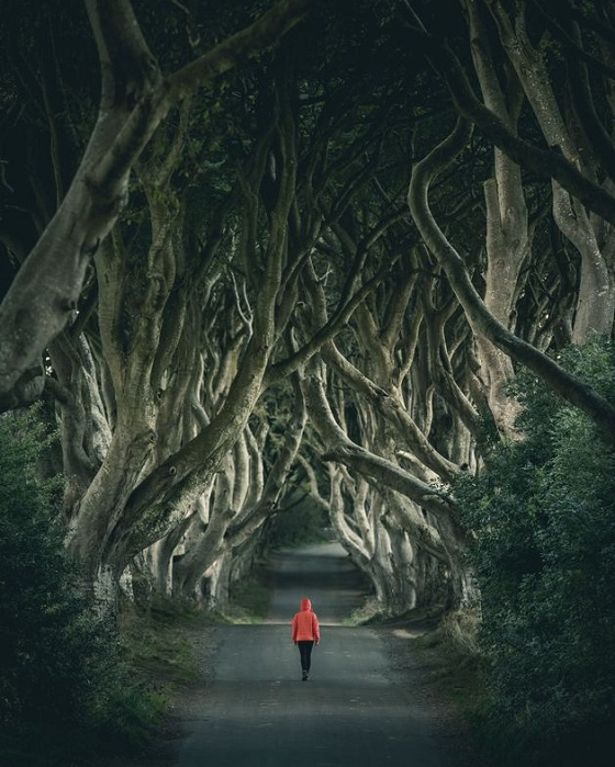 Causeway Coastal Road Dark Hedges